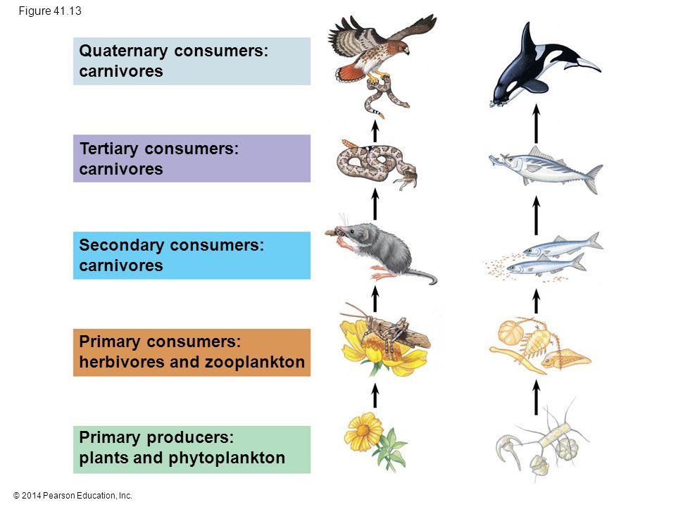 Quaternary consumers: carnivores
