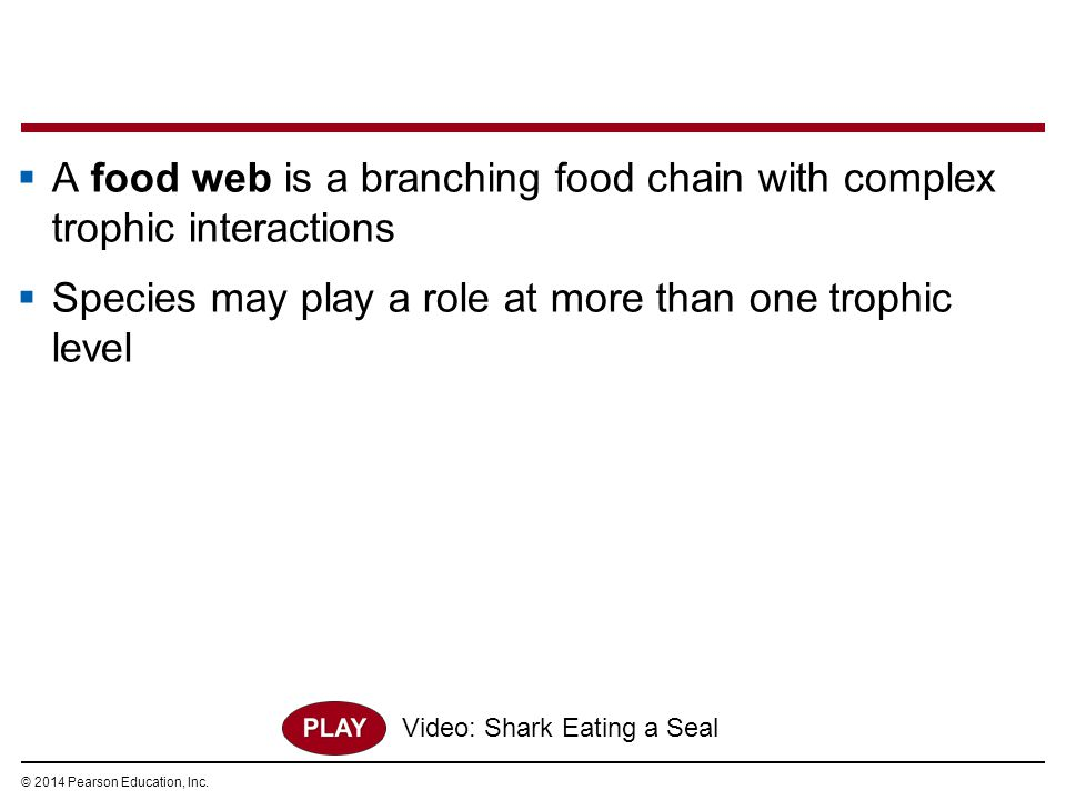 A food web is a branching food chain with complex trophic interactions
