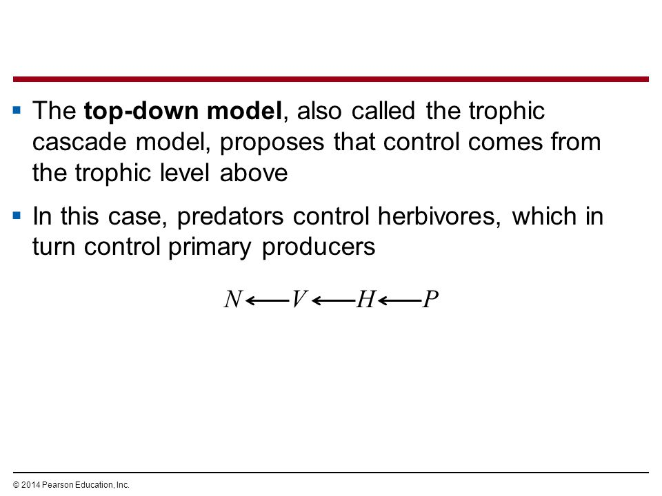 The top-down model, also called the trophic cascade model, proposes that control comes from the trophic level above