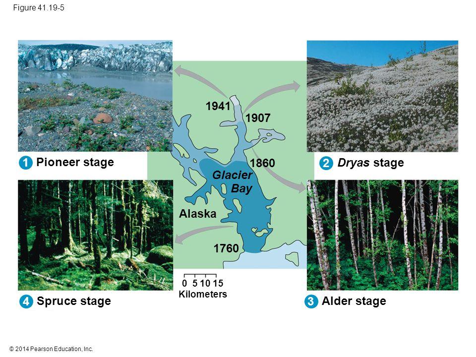 1941 1907 1 Pioneer stage 1860 2 Dryas stage Glacier Bay Alaska 1760 4