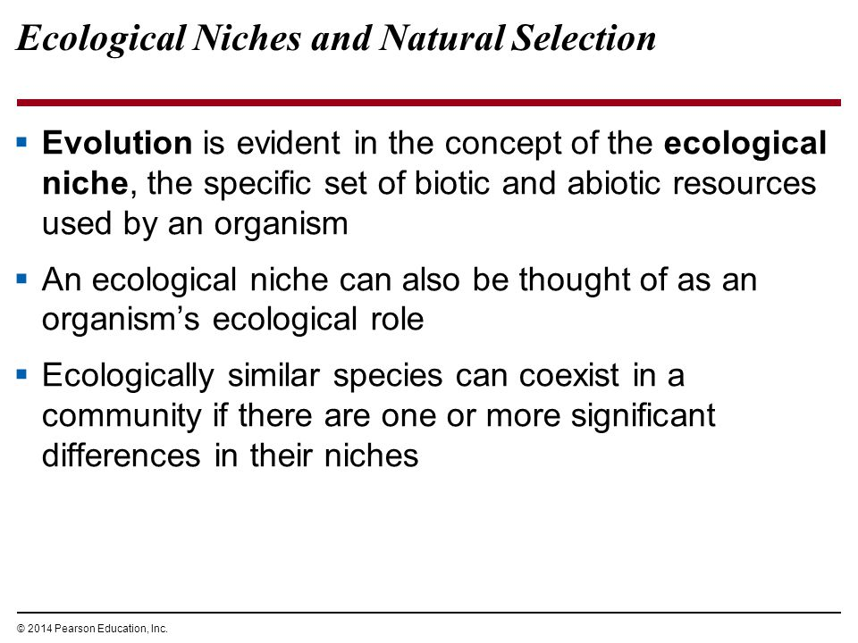 Ecological Niches and Natural Selection