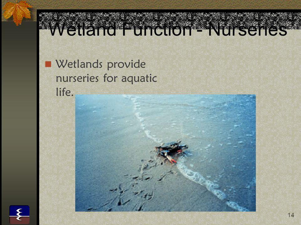 Wetland Function - Nurseries