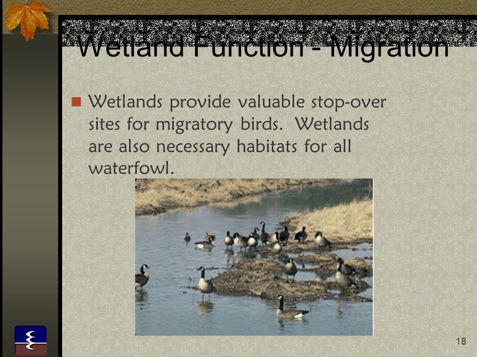 Wetland Function - Migration