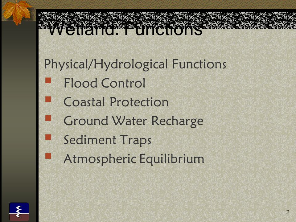 Wetland: Functions Physical/Hydrological Functions Flood Control