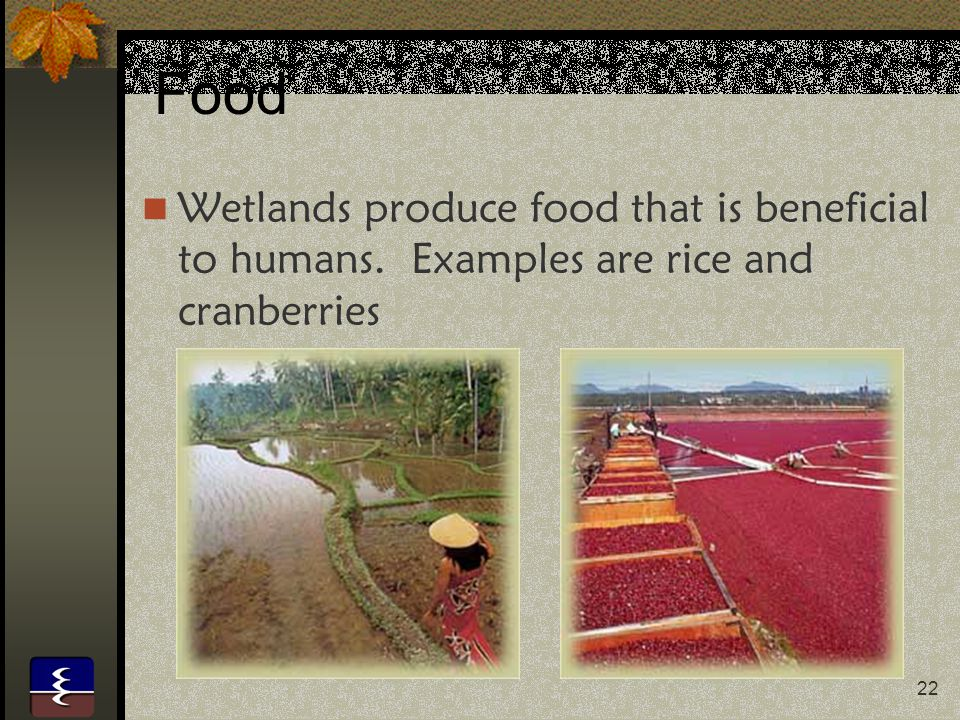 Food Wetlands produce food that is beneficial to humans. Examples are rice and cranberries