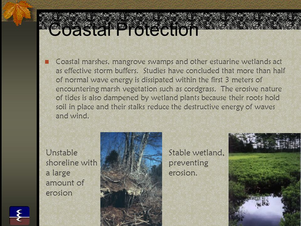 Coastal Protection Unstable shoreline with a large amount of erosion