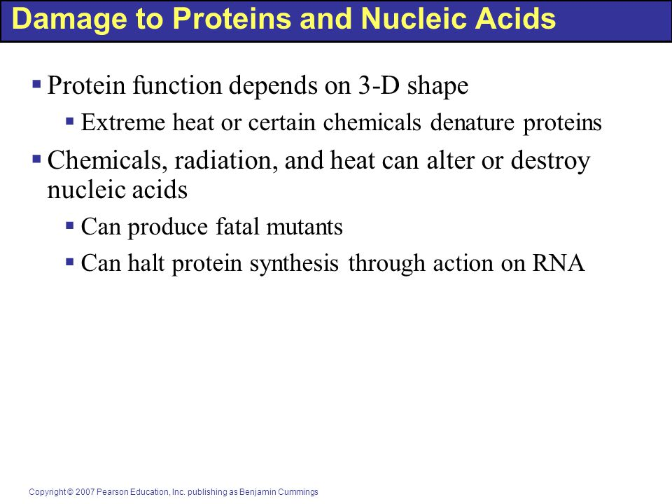 Damage to Proteins and Nucleic Acids