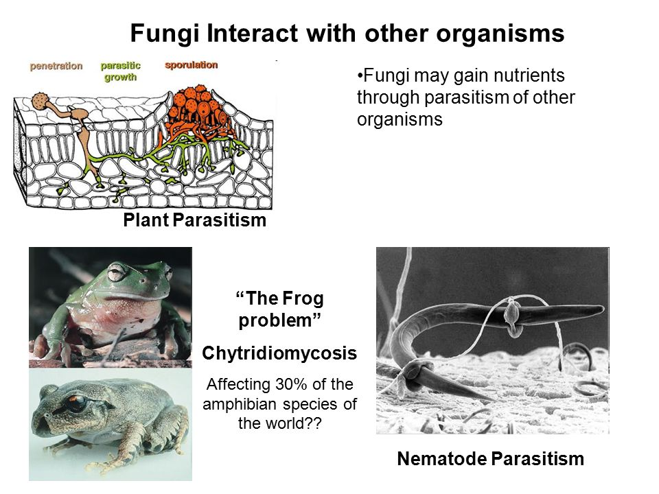 Fungi Interact with other organisms
