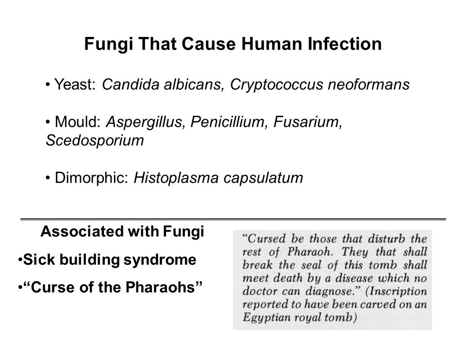 Fungi That Cause Human Infection