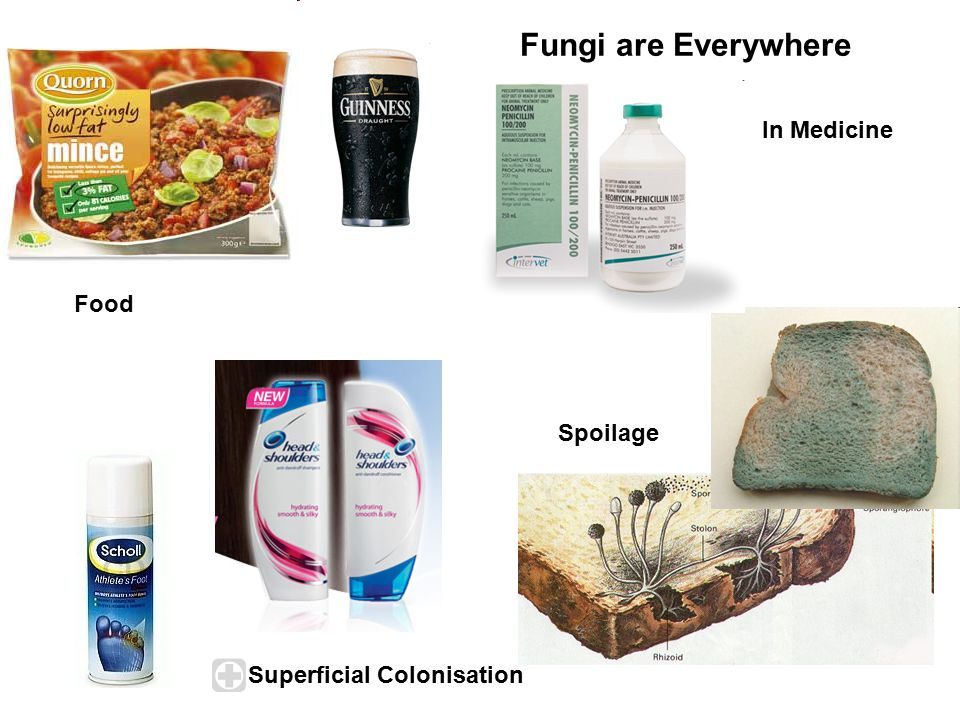 Fungi are Everywhere In Medicine Food Spoilage