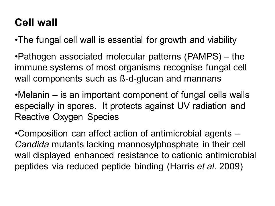 Cell wall The fungal cell wall is essential for growth and viability