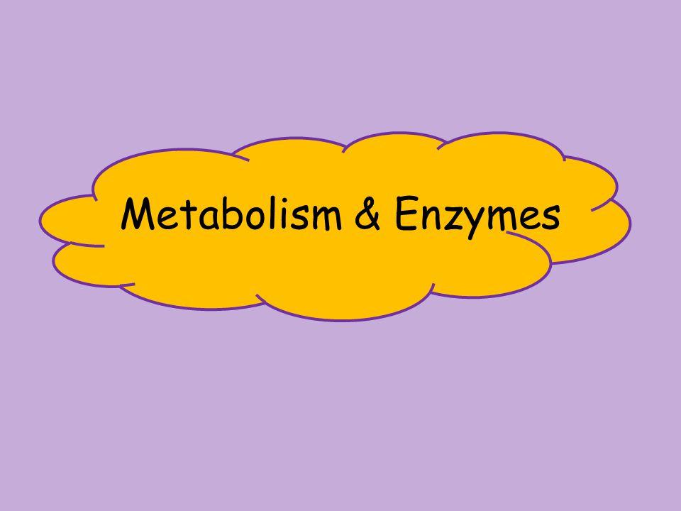 Metabolism & Enzymes