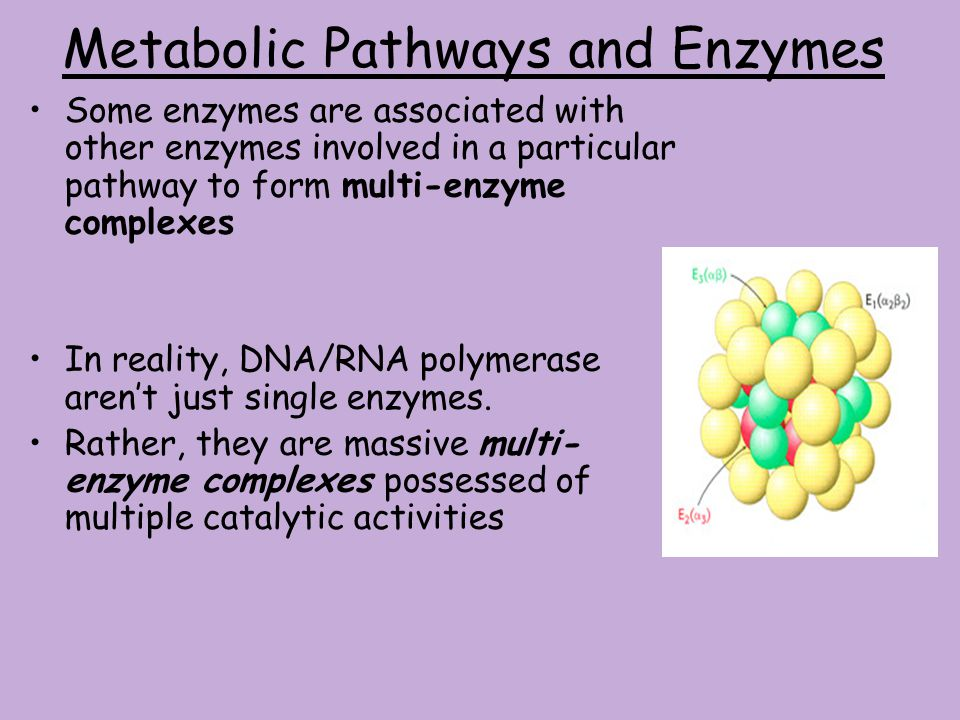 Metabolic Pathways and Enzymes