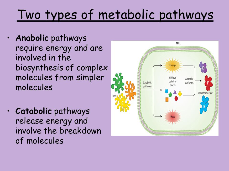 Two types of metabolic pathways