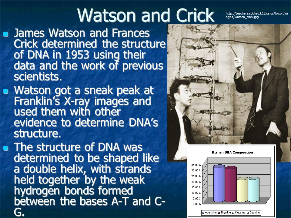 Watson and Crick http://teachers.sduhsd.k12.ca.us/lolson/im ages/watson_crick.jpg.