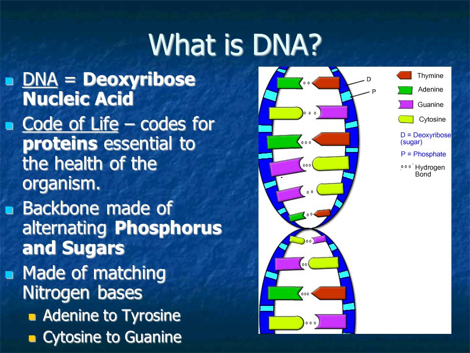 dna the code of life Connect with social media sign in with your email address e-mail or username password.