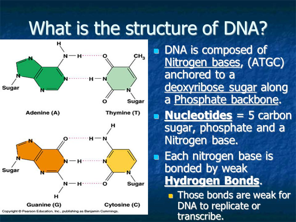 What is the structure of DNA