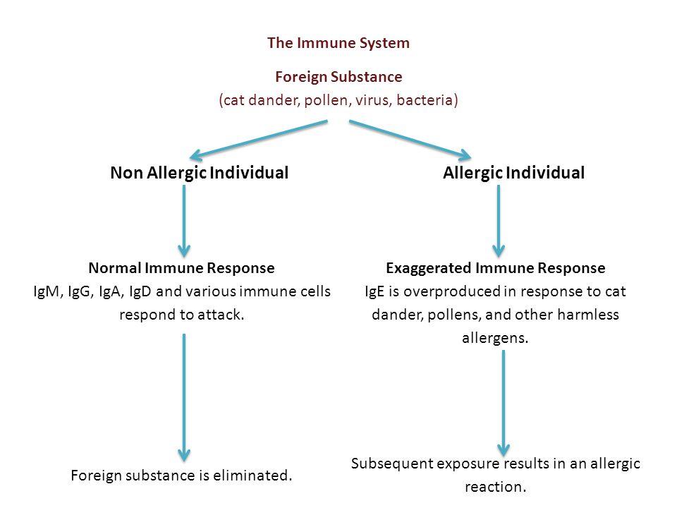 Non Allergic Individual Allergic Individual