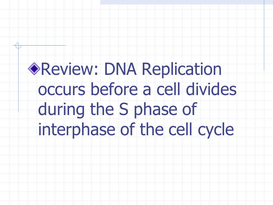 Review: DNA Replication occurs before a cell divides during the S phase of interphase of the cell cycle