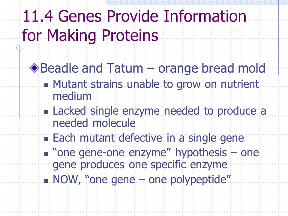 11.4 Genes Provide Information for Making Proteins