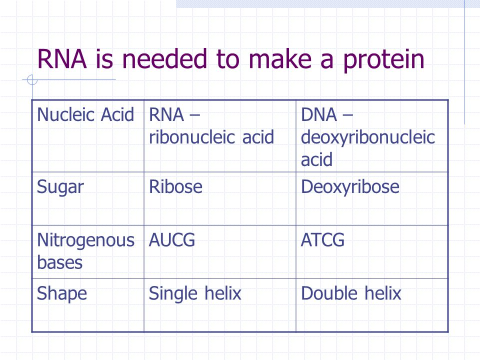 RNA is needed to make a protein