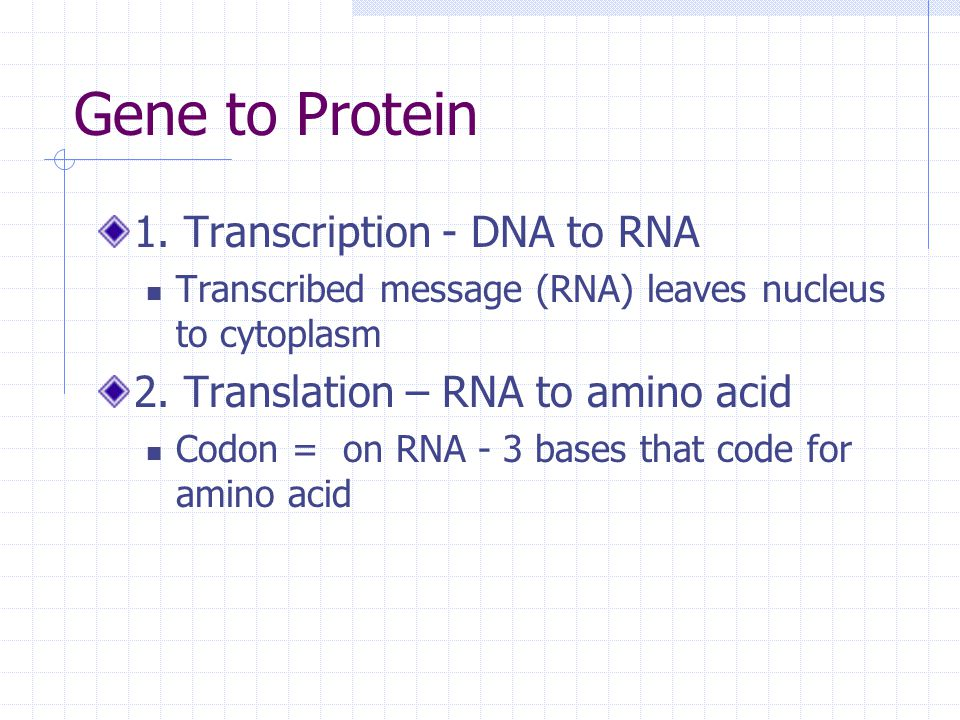 Gene to Protein 1. Transcription - DNA to RNA