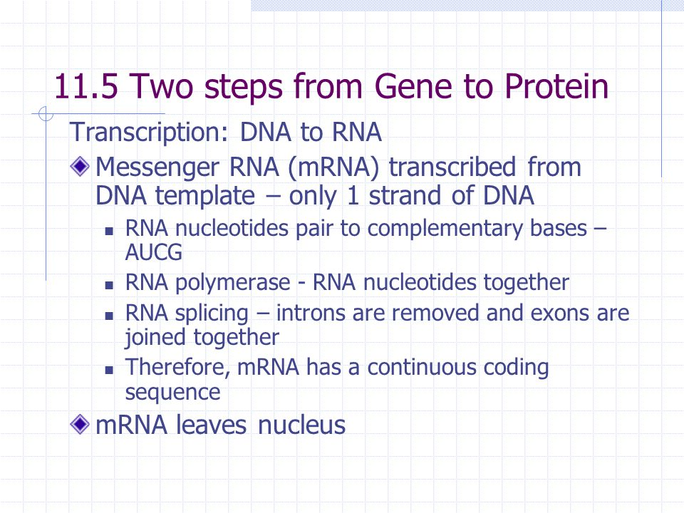 11.5 Two steps from Gene to Protein