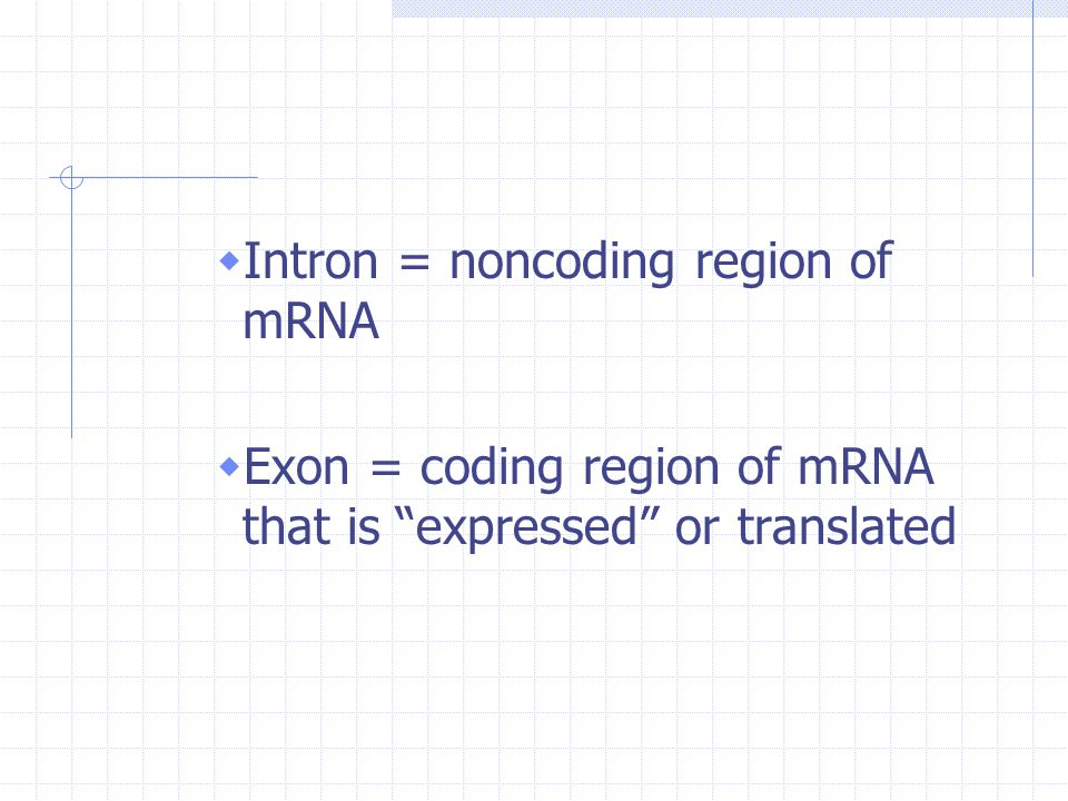 Intron = noncoding region of mRNA