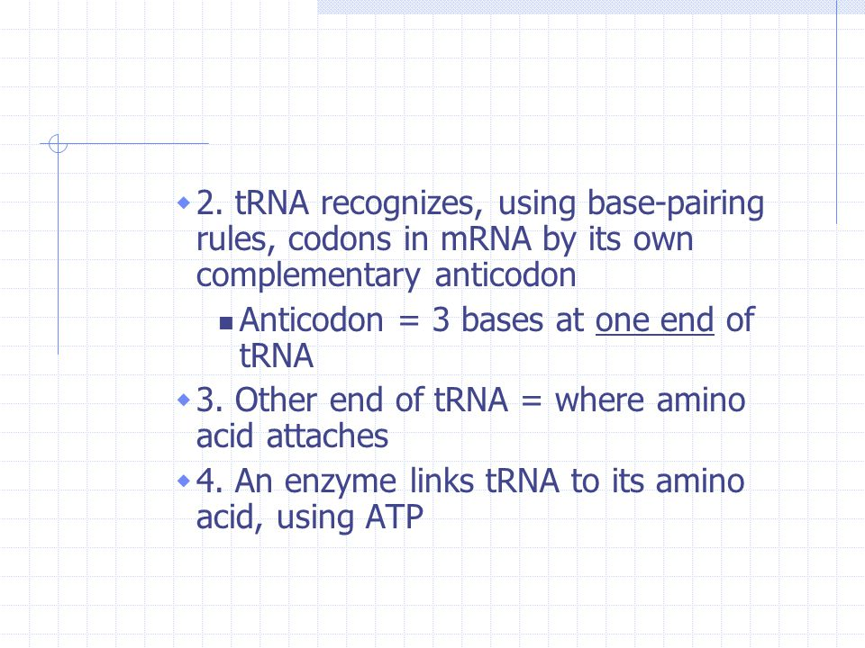 2. tRNA recognizes, using base-pairing rules, codons in mRNA by its own complementary anticodon