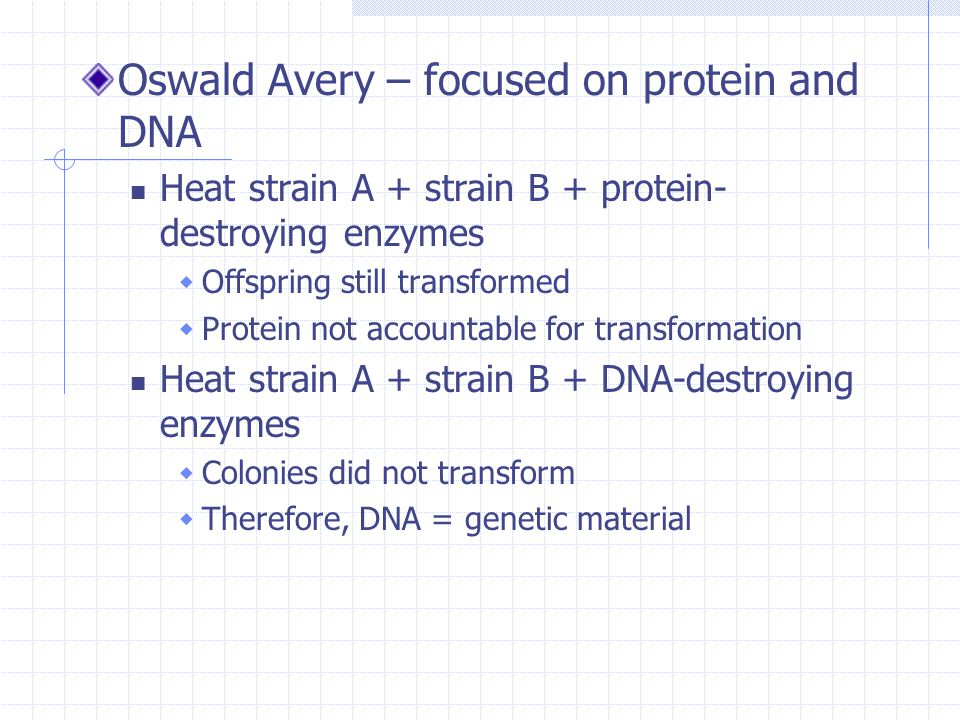 Oswald Avery – focused on protein and DNA