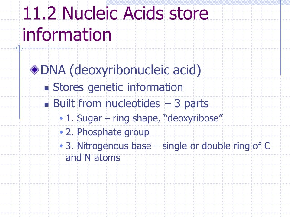 11.2 Nucleic Acids store information