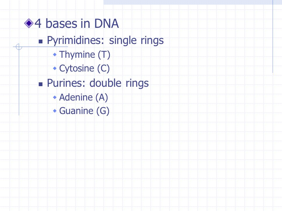 4 bases in DNA Pyrimidines: single rings Purines: double rings