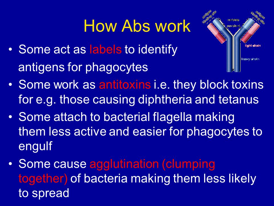 How Abs work Some act as labels to identify antigens for phagocytes