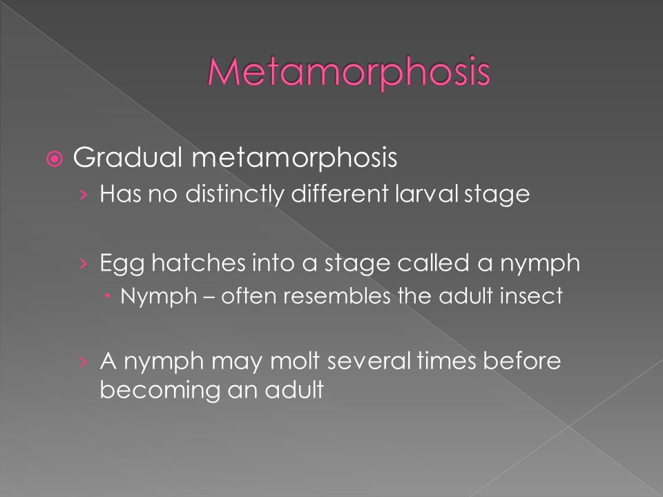 Metamorphosis Gradual metamorphosis