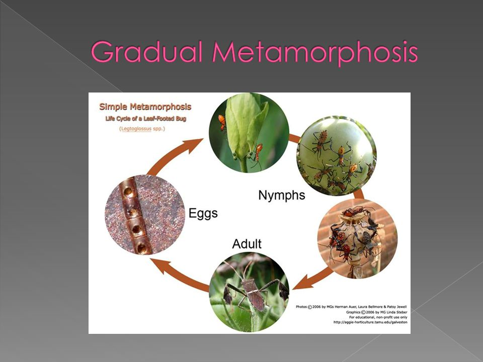 Gradual Metamorphosis