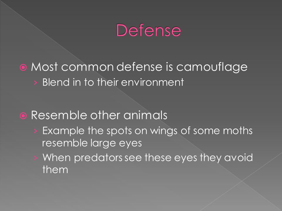 Defense Most common defense is camouflage Resemble other animals