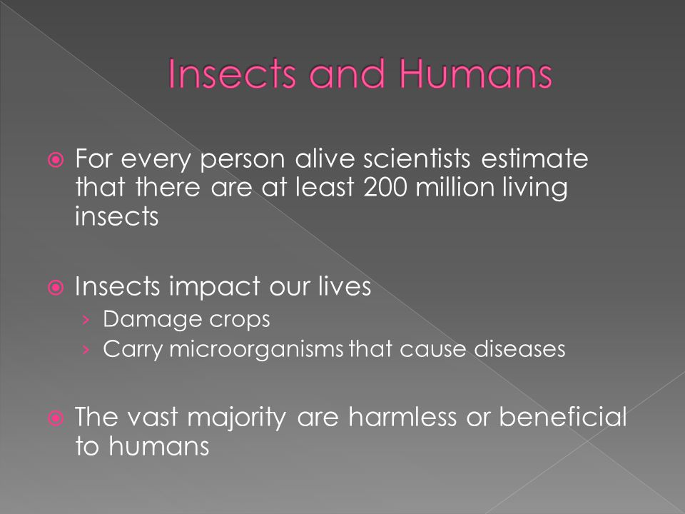 Insects and Humans For every person alive scientists estimate that there are at least 200 million living insects.