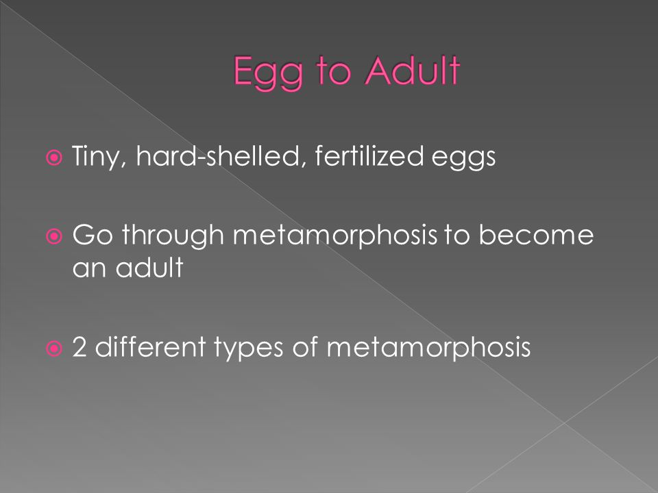 Egg to Adult Tiny, hard-shelled, fertilized eggs