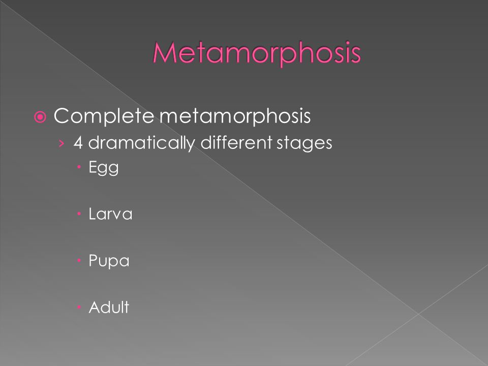Metamorphosis Complete metamorphosis 4 dramatically different stages