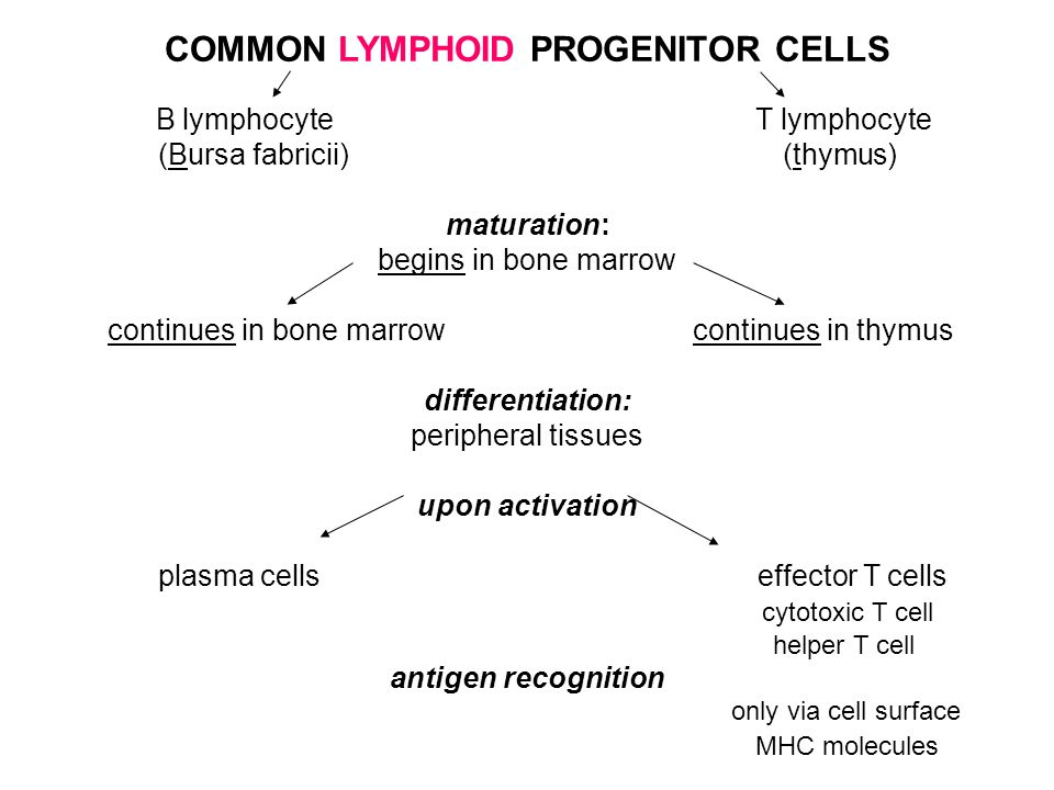 COMMON LYMPHOID PROGENITOR CELLS