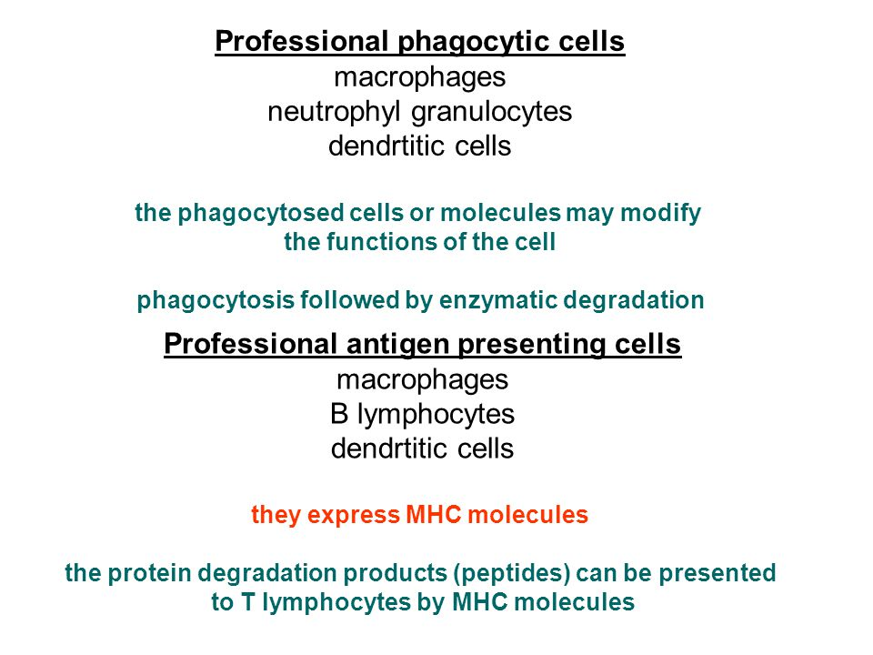 Professional phagocytic cells Professional antigen presenting cells