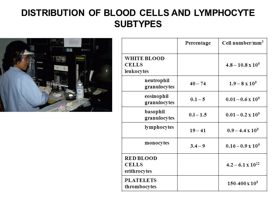 DISTRIBUTION OF BLOOD CELLS AND LYMPHOCYTE SUBTYPES