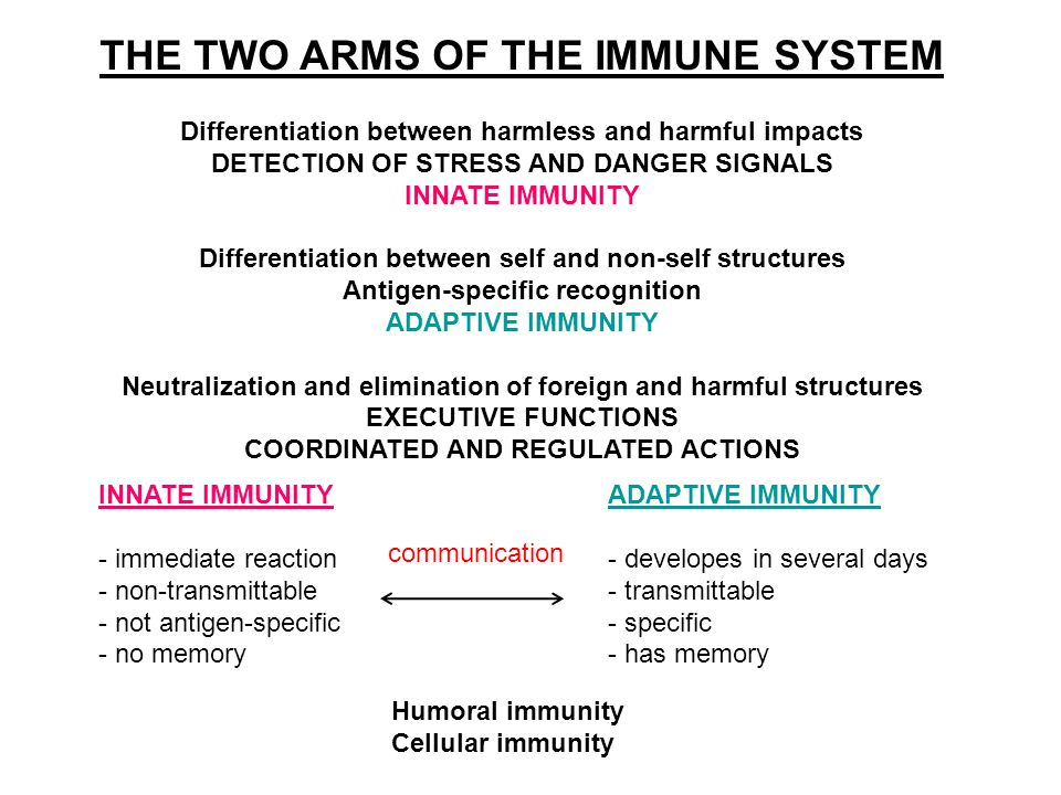 THE TWO ARMS OF THE IMMUNE SYSTEM