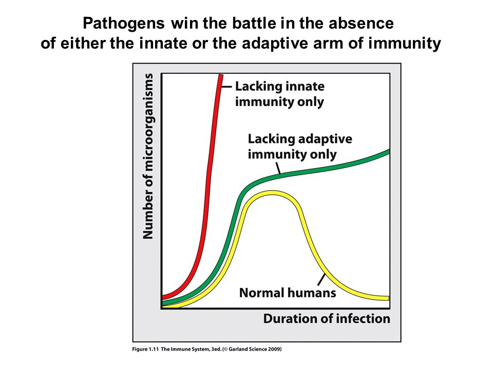 Pathogens win the battle in the absence