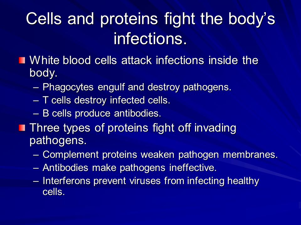 Cells and proteins fight the body's infections.
