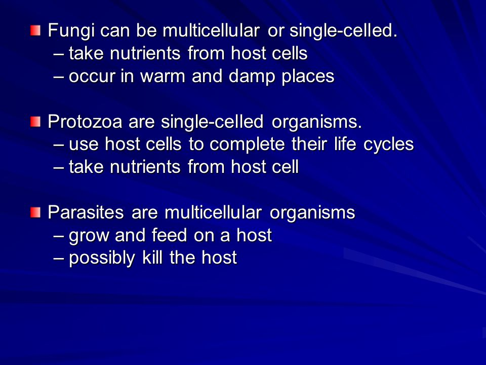 Fungi can be multicellular or single-celled.