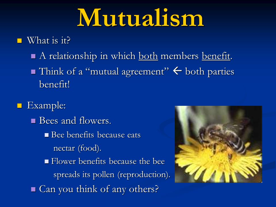Mutualism What is it A relationship in which both members benefit.