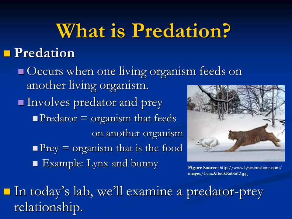 What is Predation Predation