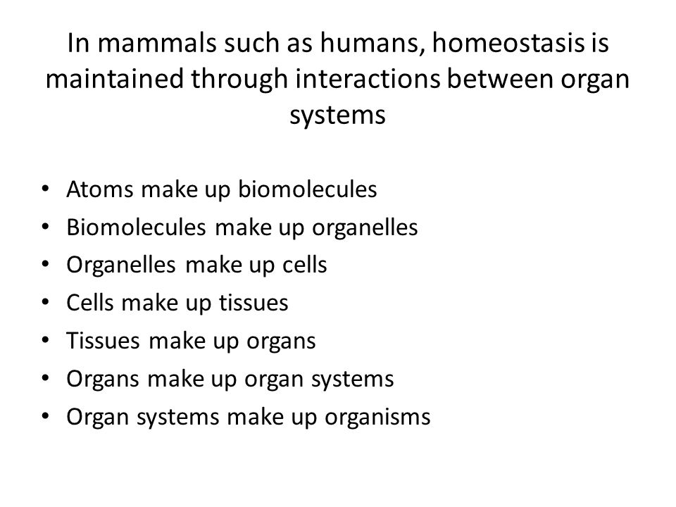 In mammals such as humans, homeostasis is maintained through interactions between organ systems