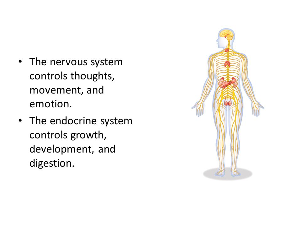 The nervous system controls thoughts, movement, and emotion.